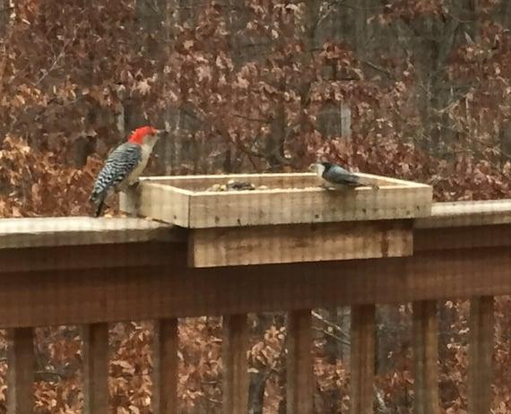 Deck rail bird feeder mount or