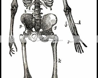 Digital Download Printable - Skeleton Diagram Illustration Human Anatomy Art Image - Paper Crafts Scrapbook Altered Art - Halloween Death