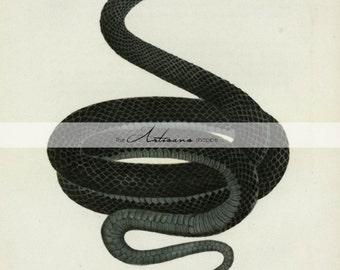Black Snake Goth Poison Dark Witchcraft Medieval Serpent Boa Macabre - Instant Art Printable Download - Altered Art Paper Crafts Scrapbook