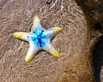 Starfish ceramic | wall hanging | Sardinia ceramics | animal figure | sea decoration
