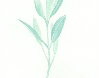 "Sage - Herb  5"" x 7"" Watercolor Print"