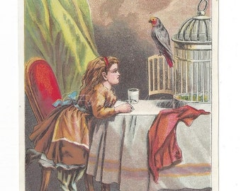 Victorian Girl with Parrot: 1880's Lithograph Album Card