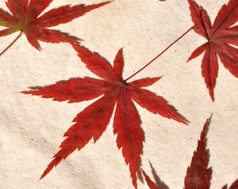 10 Red Japanese Maple Leaves, Dried Leaves, Pressed Leaves, Autumn Wedding Leaves, Fall Decor, Fall Leaves, Dried Autumn Leaves Autumn Decor