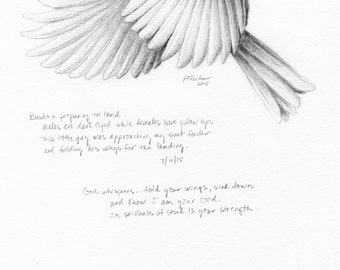 Bushtit, Bird Drawing, Bird Sketch, Nature Journal, Inspirational