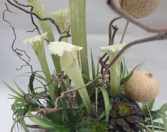 Silk Flower Arrangement, Home decor. Dry exotic plans