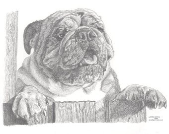 BRITISH BULLDOG (4) Limited Edition, Animal Print, Drawing, Pencil, Print, Wildlife, Animal, Art
