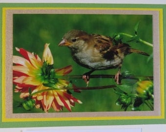 Finch on dahlia flower all-occasion greeting card