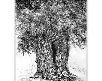 Juniper Tree / Original handmade illustration / Pen on paper A3 / Trees from the Forest