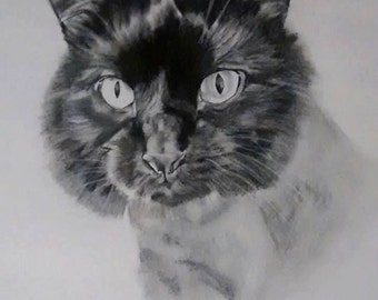 EXAMPLE: black and white, 8x10, one pet