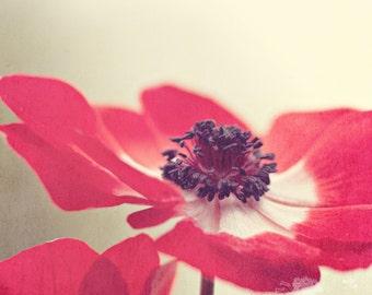 Fine Art Print, Anemone Print, Flower Photo, Red, Delicate, Nature Art, Still Life Art, Macro Photo, Botanical Art, Garden, Home Decor