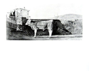 """Fungus, Young Bull by Andrew Wyeth - 1971 Vintage Book Page - 2 Sided Page - Reproduction Print - Black and White - 9.5"""" x 10"""""""