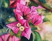 Magenta Bougainvillea - Original 7x5-inches, Watercolor Painting by Prerana Kulkarni