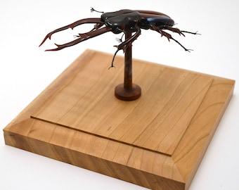 Stag Beetle on Pedestal - lampworked lifelike glass lucanus cervus figurine made by Glass Artist Wesley Fleming