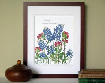 Pressed flower artwork, Bluebonnets, Indian Paintbrush, Texan gift, Texas wildflowers, 11x14 double matted, wall decor no. 0077