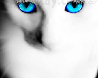 Khao Manee White Cat with Blue Eyes, Cat Photography,  Cat Wall Art, Cat Decor, Turquoise, White, Khao Manee Breed