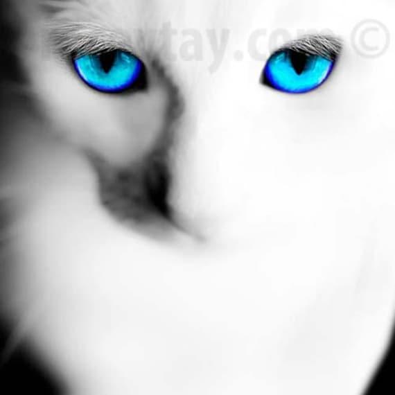 White Cat Prints, Cat Blue Eyes Photos, Cat Wall Art, Cat Wall Decor, White Cat Photos, Turquoise Blue, White Wall Art, Ghost Cat Print