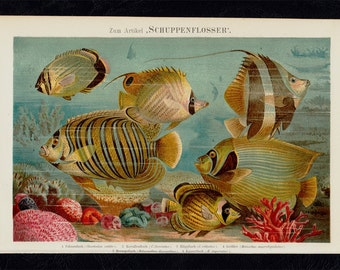 1889  Antique print,  SEA LIFE lithograph, beautiful  finned fishes on the seabed, striped fishes, Tropical fishes. original antique
