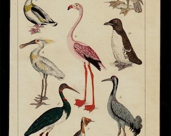 1833 Antique print of birds, Pink flamingo, wading birds, waterfowl, penguin, spoonbill, ibis, duck,  hand colored engraving