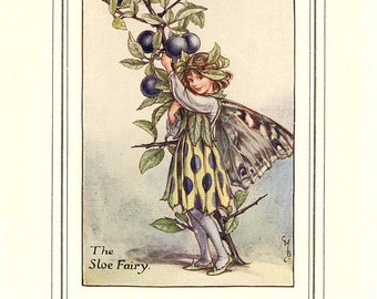 The SLOE FAIRY Vintage Book Plate Original Page c. 1940 Book of the Flower Fairies Cicely M Barker