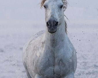 White Horse Runs at Sunrise II - Fine Art Horse Photograph - Horse - Camargue - Fine Art Print