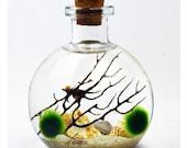 Bottle Terrarium - Live Moss Ball Terrarium - Japanese Moss Ball Aquarium - Bottle Jar - Cork Stopper Glass Vase - Home - Office -