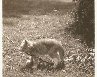 """Vintage Snapshot - """"Ferocious Kitten"""" - Kitty Attacks Stick - Found Vernacular Photo - Playful Kitten"""