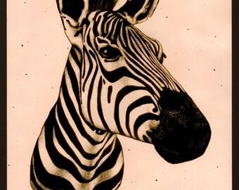 Zebra Pen and Ink Illustration Prints