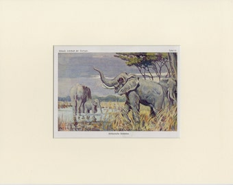 Vintage Elephants Print C.1900 Antique Lithograph - Baby Elephant, Mother Elephant - Wall Art, Home Decor, Christmas Gift - Matted 11x14