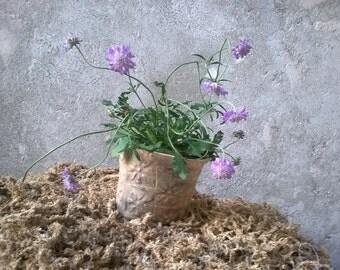 AS PAPER - flowerpot