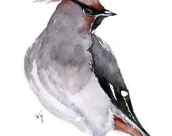 Original watercolour painting Cedar Waxwing