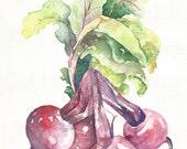 Beets Original Watercolor Painting, A4, Kitchen Decor, Vegetable Art, Purple,  Green , Leaf,
