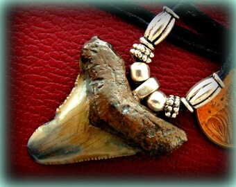 MEGALODON Great White SHARK TOOTH Necklace Pendant Jewelry South Carolina fossil