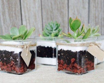 Thank You Gifts, 10 Succulent Terrariums for Weddings, Showers, Parties, Company Corporate Gift
