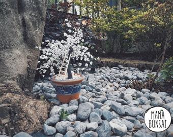 Cherry blossom, handmade beaded Tree