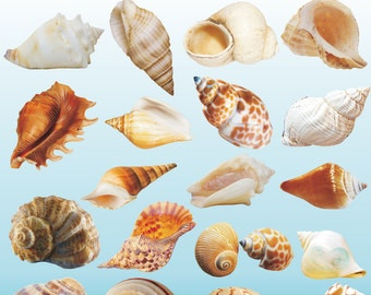 Seashell Clipart, Under the Sea Shells Clipart, Seashell Clip Art, Seashell Image, Printable Sea Shell, Ocean Shell Image, Scrapbooking, PNG