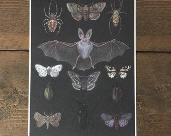 Afterlight A4 Giclee print - bats, spiders, moths, beetles