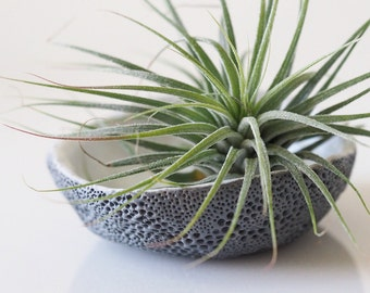 Air plant holder - Air dry clay air plant holder - Tillandsia air plant display - Modern air plant container - Handmade air plant holder