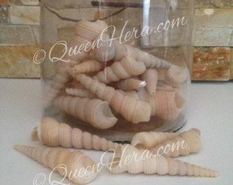 "10pcs Brown Large Turitella Screw Shells (3-4"") Turitella Seashell Beach Theme Wedding, Craft Making"