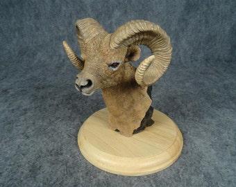 Simpkins Wildlife Bust - Big Horn Sheep