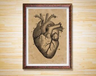 Human Heart art poster Anatomy print Medical illustration
