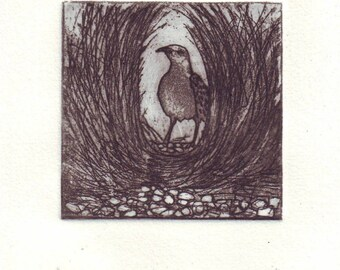 Small etching of a bowerbird in the bower