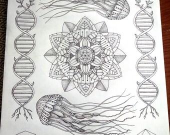 Hydrozoa, A3, Limited edition print