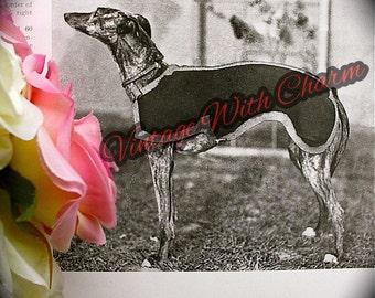 Vintage 1930s Knitting Pattern Dog Coat, Whippet, Saluki, Small Greyhound