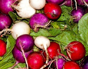 Kitchen Vegetable Wall Decor, Picture of Radishes ,Vegetable Decor on Canvas,Kitchen Radishes,Red Purple White Photo,Bright Kitchen Wall Art
