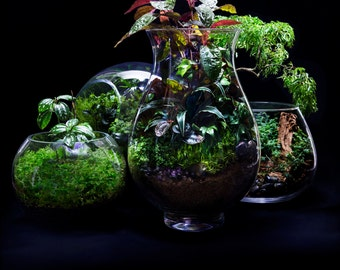 LOCAL ONLY - Made-To-Order Custom Terrarium