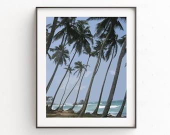 Palm Tree Print Art, Palm Tree Wall Print, Wall Art Prints, Blue Wall Part 36