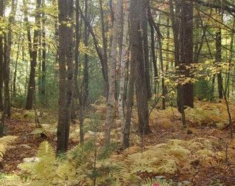 Fall Day 2