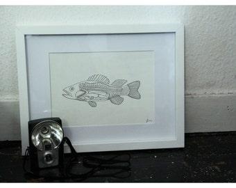 Illustration by Christel René, anatomically little fish.