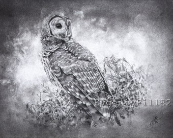 Owl (5), original drawing by evgeniyfill82, 8 x 12 inch, graphite on paper