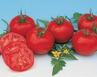 Heirloom Tomato- MOSKVICH -60 day- RED- Indeterminate - 25 seeds